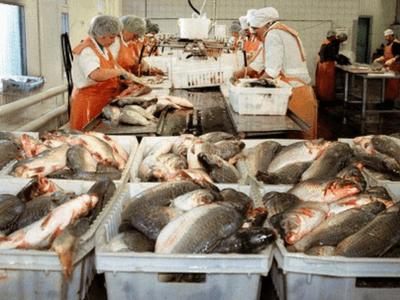 рыбный завод Польша