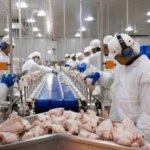 работа в Польше для Украинцев на птицефабрике