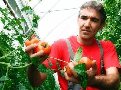 Cортировка и упаковка помидоров  VEGAPOL