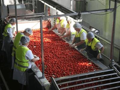 Переработка фруктов, Materne Polska