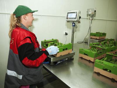 Нарезка и упаковка овощей, AMAZIS