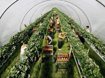 Работник теплицы AGROENERGIA