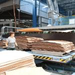 Оператор деревообрабатывающего оборудования, Paged Pisz