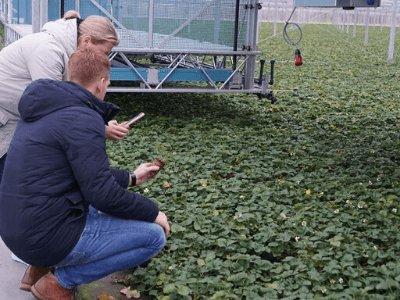 Посадка клибники и малины в Польше FLEVOPLANT