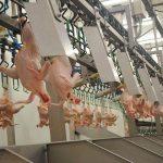 Переработка мяса птицы, ALGAS