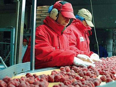 Переработка фруктов, POLARICA