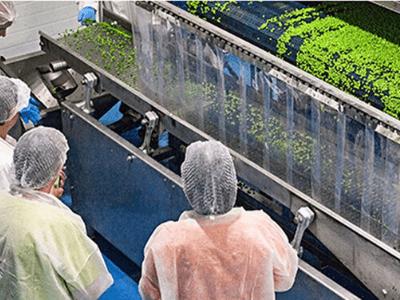 Производство замороженных овощей и ягод, Masfrost