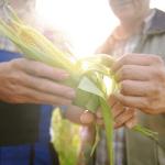 Разгрузка и сортировка кукурузы, RUN