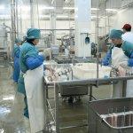 Обработка колбасных оболочек, ASG