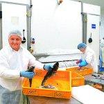 Обработка рыбы, ABRAMCZYK