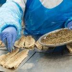 Пеработка рыбы, Libru Sea