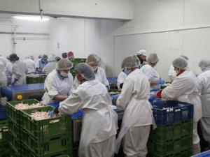 Производство корма для животных, SMS FOOD