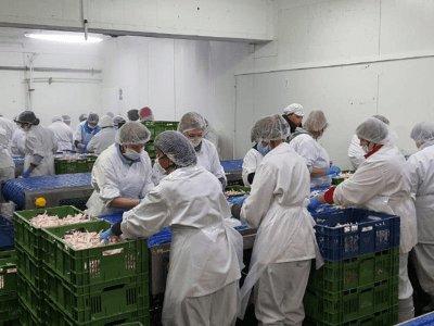 Виробництво корму для тварин, SMS FOOD
